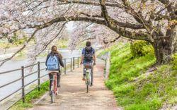 Đạp xe có giảm mỡ bụng không? Khám phá ngay!