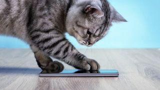 Con người sắp giao tiếp được với loài mèo nhờ ứng dụng này