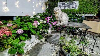 Cặp vợ chồng phá bỏ sân đầy rác và cỏ dại, cải tạo thành khu vườn ai cũng muốn ghé thăm