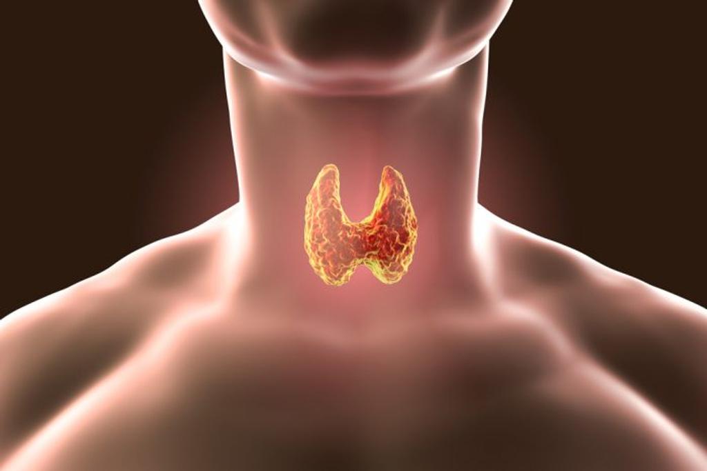 Tuyến giáp có chức năng gì? Vai trò của hormone tuyến giáp đối với cơ thể