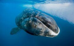 Gene cá voi có khả năng kháng ung thư cao