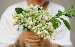 Hoa bưởi và khúc hoan ca với đồ ngọt Hà thành: Không chỉ là ăn, đó là nhâm nhi cả tinh hoa đất trời mùa xuân